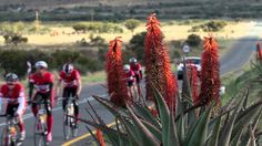 """This is the Unogwaja 2013 Short Film titled """"Go with your heart"""" I have goosebumps all over today. It's been the most incredible journey and feel very grateful to have been part of it. Ultra Marathon, Very Grateful, Cyclists, Thing 1 Thing 2, 10 Days, Your Heart, Short Film, South Africa, Take That"""