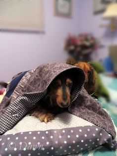 MY TAKE : Make your dachshund a tunnel bed / cuddle bed! Weiner dogs love to burrow, and this cute bed gives them somewhere to tunnel. (Plus it's totally machine washable!) #puppy #dog Puppy pocket Cave bed