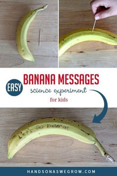 Simple, fun, no-prep science experiment for kids to do at home. With just 2 supplies try writing messages on bananas and watch as they change. Toddler Science Experiments, Preschool Science, Science For Kids, Science Activities, Science Projects, Toddler Preschool, Outdoor Activities For Kids, Hands On Activities, Toddler Activities