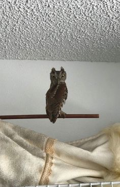 A friend found this baby owl in her garage. We don't know the species but she lives in Florida. Any ideas please? Thank you