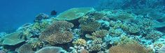 The Great Barrier Reef, is one of Australia's most visited attractions year-round. Which reef should you visit? Read to find out & view our tours today! Brain Coral, Seven Wonders, Colorful Fish, Unique Animals, Underwater World, Great Barrier Reef, Marine Life, The Locals, Wonders Of The World