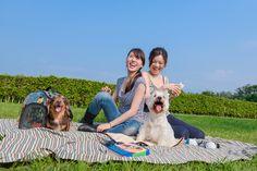 IBIYAYA's transparent hard case carrier Best Travel Stroller, Cat Stroller, Cat Carrier, Travel System, Pet Travel, Dog Barking, Pet Supplies, Couple Photos