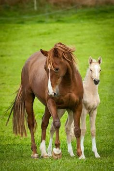 Solaris Sport Horses. Mare and foal.