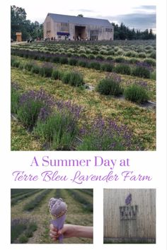 Visiting Terre Bleu Lavender Farm in Milton, Ontario, Canada - a lovely way to spend a summer afternoon and an easy day trip from anywhere in the Toronto area | Gone with the Family