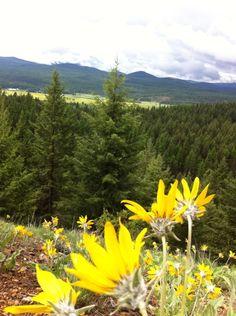 Lupfer Trail Overlook near Whitefish, Montana