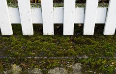 We are gazing at the feet of this White Fence as it treads lightly over green Icelandic moss.  www.whitefence.com