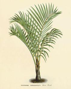 Palm tree art print antique Botanical Art by VictorianWallArt, $10.00