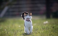 "<p>Beautiful Stitch is regarded as a kind of adoptive ""mother"" to all those animals who are lucky enough to be cared for her by her. When it comes to challenging the stereotypical perception of cats as aloof and uncaring, she is undoubtedly one of those amazing feline heroes leading the way!</p>"