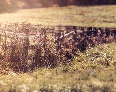 Country Landscape, Rustic Farmhouse Decor, Rustic Fence Picture, Sepia, Brown, Warm Earthtones, Beige Landscape, Farm Photography.