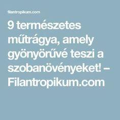 9 természetes műtrágya, amely gyönyörűvé teszi a szobanövényeket! – Filantropikum.com