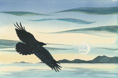 Night Flight by Sue Coleman