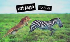 Swedish Verbs: att jaga - to hunt Learn Swedish, Swedish Language, Old Norse, Stockholm, Scandinavian, Words, English Translation, Fun, Pictures