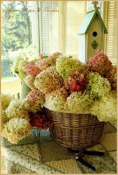 Aiken House & Gardens: Basket of Hydrangeas. Fresh Flowers, Beautiful Flowers, Exotic Flowers, Purple Flowers, Hortensia Hydrangea, Hydrangeas, Bountiful Baskets, Burning Bush, Welcome Spring