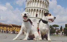 The pets of Instagram that spend more time on holiday than you http://www.telegraph.co.uk/travel/news/the-pets-of-instagram-that-spend-more-time-on-holiday-than-you/?utm_campaign=crowdfire&utm_content=crowdfire&utm_medium=social&utm_source=pinterest