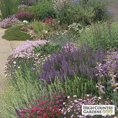This low-growing collection is ideal for hot, sunny, problem areas like those found against garage walls and along driveways and roads. With this garden, you can easily create a colorful, long blooming, low maintenance flower bed. Save $25 off the single plant price of 253.73!