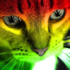 Ganja kitty