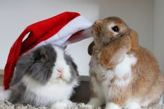 """608 mentions J'aime, 47 commentaires - Alf & Molly #Pimousse #pimoussethebunny (@alf_thebunny) sur Instagram : """"MERRY CHRISTMAS We are so happy to experience with you our first christmas - thank you so much…"""""""