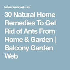 30 Natural Home Remedies To Get Rid of Ants From Home & Garden | Balcony Garden Web