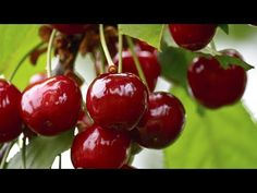 God Himself Sent It To People:Antibiotic, Antioxidant,  Liver-protector and Cancer-fighter - YouTube