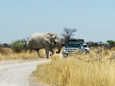 Bange Sekunden ..., via Flickr. Cute Baby Elephant, Elephant Sanctuary, Cute Babies, Animals, National Forest, Animales, Animaux, Animal, Animais