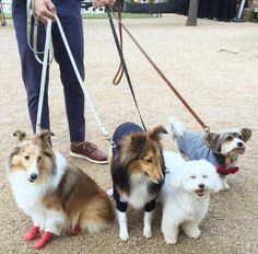 It's a puppy party at Discovery Green! - Houston, TX - Angus Off-Leash #dogs #puppies #cutedogs #dogparks #houston #texas #angusoffleash