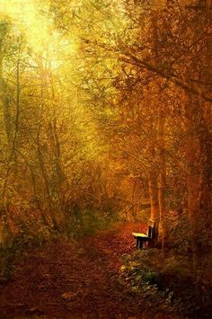 Solitude within Nature