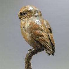 Little Owl II - A Charming, Characterful, Ltd. Edition Bronze Bird Sculpture of a life-size Little Owl, by acclaimed wildlife sculptor, Nick Bibby Bird Sculpture, Animal Sculptures, Bronze Sculpture, Wood Carving Art, Wood Art, Wood Carvings, Little Owl, Ceramic Owl, Equine Art