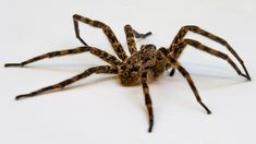 12 best spider things images spider bites spider webs spiders rh pinterest com