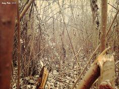 Through the woods - winter in Kliprivier.