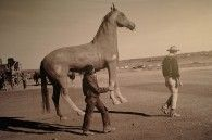 1959: John Wayne Followed by His Horse