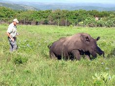 Stop Rhino Poaching!