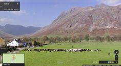 Dog herding sheep in Langdale, Lake District, England.Thank you Lynette for the sheep !