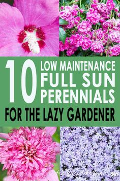 list of full sun perennials that are easy to care for and low maintenance ., GREAT list of full sun perennials that are easy to care for and low maintenance ., GREAT list of full sun perennials that are easy to care for and low maintenance . Full Sun Perennials, Best Perennials, Shade Perennials, Flowers Perennials, Planting Flowers, Flowers Garden, Flower Gardening, Perrenial Flowers, Flower Garden Borders