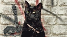 Unimpressed cat filing nails gif
