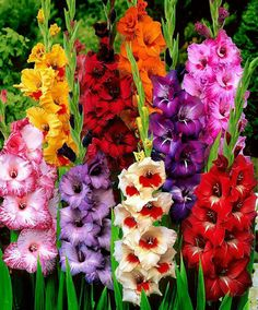 Express your sentiments with the help of the colorful flower bouquets and perfectly arranged bunches. Allow yourself to enjoy 1800 flowers Coupons and discount offers on your favorite flower arrangements for terrific prices.