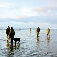 Razor clams: Westport, WA - from SUNSET directory of 90+ weekend escapes!