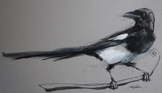 Magpies on Behance