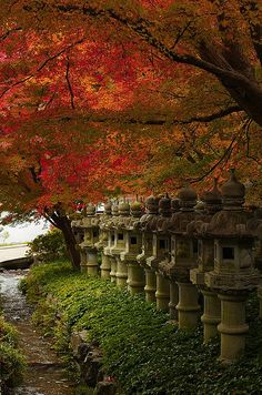 Japanese maple trees overhang a row of lanterns at Katsuo-ji temple, Osaka, Japan