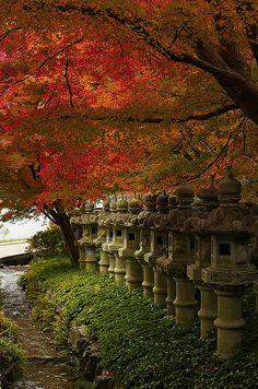Matsuri(祭り): fête annuelle ou bisannuelle du sanctuaire. Miko(巫女): «jeune vierge du sanctuaire». Elles sont vêtues d'une jupe rouge recouverte d'une tunique blanche. Aux temps anciens, lesmikoétaient des shamans (itako). Mikoshi(神輿): châsse portable que les fidèles transportent dans les rues d'un quartier au cours d'une procession. O-bake(お化け): fantômes; esprits errants. O-harai(お祓い): purification rituelle auchōzuyaavant d'adorer lekami.