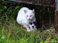 Ha poco più di una settimana questo gattino nato tra vecchie gabbie in piena campagna.