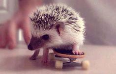 lil hedgehogs :)