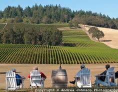 Guests enjoy the view of Stoller Winery estate vineyard from tasting room patio, Dundee Hills, Willamette Valley, Oregon