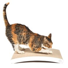 4CLAWS Curve Scratching Pad (White) - BASICS Collection Cat Scratcher >>> Additional details at the pin image, click it  : Cat scratcher