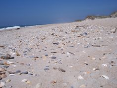 One of the best spots to find shells...Ocracoke Island, NC