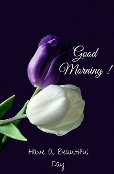 Morning Words, Good Morning Quotes For Him, Good Morning Cards, Good Morning Inspirational Quotes, Good Morning Happy, Good Morning Flowers, Morning Morning, Happy Weekend, Good Morning Beautiful Images