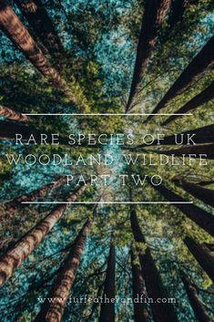 Rare Species of UK Woodland Wildlife – Part Two Bat Species, Endangered Species, Nocturnal Birds, Forest Of Dean, Dawn And Dusk, British Wildlife, Bird Watching, Stargazing, About Uk