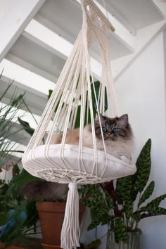 23 Clever DIY Christmas Decoration Ideas By Crafty Panda Cat Furniture, Plywood Furniture, Wood Hanger, Diy Cat Hammock, Hammock Bed, Design Patio, Design Design, Big Pillows, Cat Room