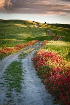 agritourisme toscane, sejour toscane, italie, les champs verts d'Italie