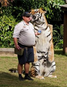 Oh my...that's intimidating!  Look at how little that guys head looks compared to the tiger!  Yikes!
