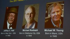 Nobel Prize In Medicine Is Awarded To 3 Americans For Work On Circadian Rhythm